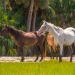 Wild Horses Profile