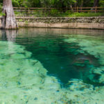 Rock Bluff Spring - Suwannee River