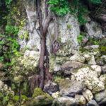 Roots in Rocks