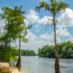 Suwannee River at Log Landing WMA
