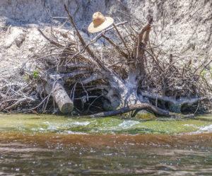 Boiling Spring - Suwannee River