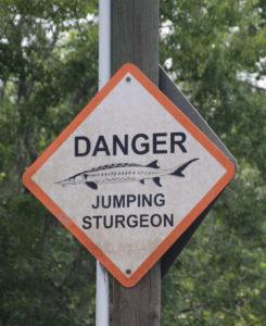 Danger Sturgeon Jumping