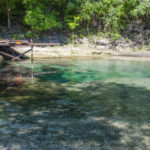 Mearson Spring from the Suwannee