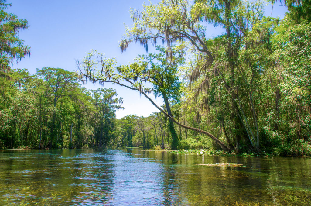 Paddling the Silver River