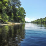 Paddling the Suwannee River