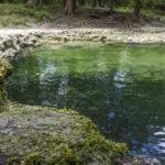 Ruth Springs - Suwannee River