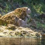 St. Bernard - Watchdog Rock
