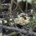 Fungus Among Us - Gum Slough