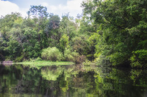Gum Slough enters the Withlacoochee River
