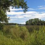 Pellicer Creek Outlook