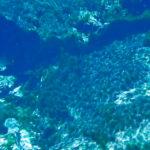 Underwater - Gum Spring #1