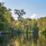 Bear Creek Ocklawaha River