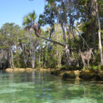 North Shoreline - Three Sisters Springs