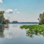 Ocklawaha Meets St John River
