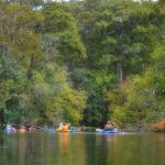 Ocklawaha River Awe