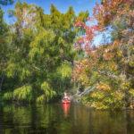 Paddling Bear Creek