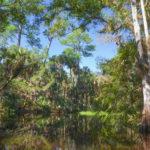 A Diverse Haw Creek