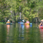Paddling Haw Creek