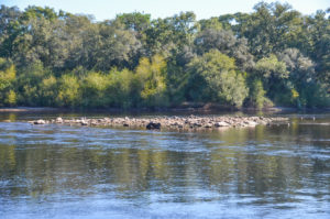 Rocks at Owen Springs Launch - Suwannee River