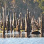 Cypress Memorials