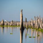 Cypress Sentinels