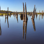 Ocklawaha Reflection
