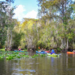 October on the Ocklawaha River