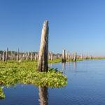 Original Ocklawaha Shoreline