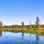 Along the Ocklawaha River