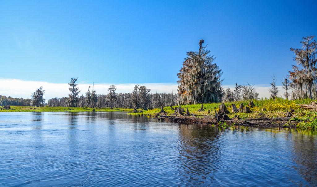 Ocklawaha River Wilderness