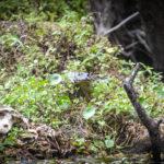 Hidden Gator