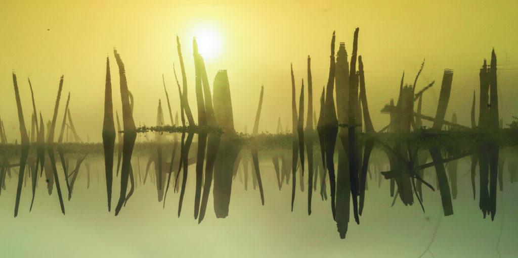 Ocklawaha Reflection