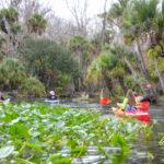 Wekiva River Palms