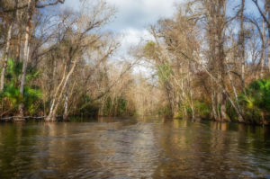 Winter on the Ocklawaha River
