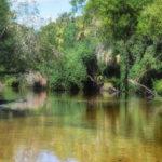 A Shallow Little Manatee River