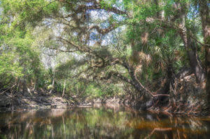 Alafia River Canopy