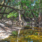 Along the Alafia River