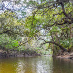 Banks along the Alafia River