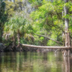 Horizontal Palm - Alafia River