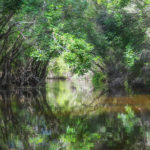 Little Manatee River Canopy