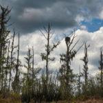 Osprey Sentinel