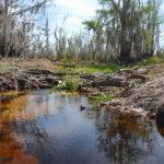 Side Flow into Sweetwater Creek
