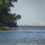 St. Petersburg through the mangroves