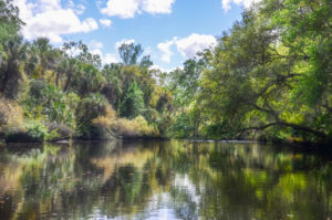 The Little Manatee River