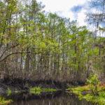 Treeline Bank - Sweetwater Creek