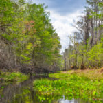 Upper Sweetwater Creek
