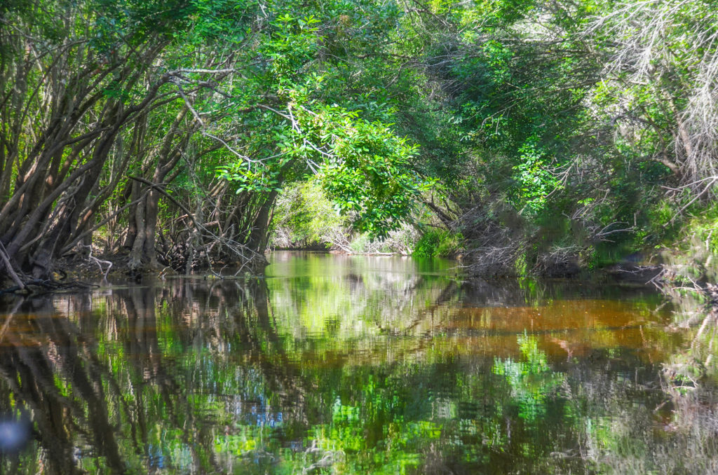 Canopy over Little Manatee River