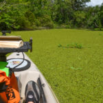 Sea of Duckweed - Deep Creek