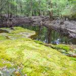 End of the line - Olustee Creek