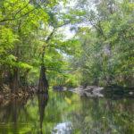 Leaving Olustee Creek